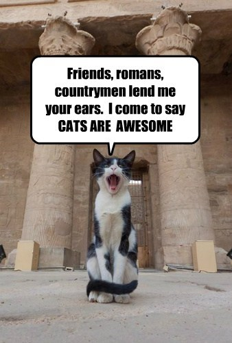 Friends, romans, countrymen lend me your ears.  I come to say  CATS ARE  AWESOME