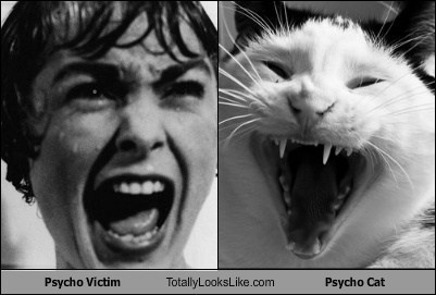 Psycho Victim Totally Looks Like Psycho Cat