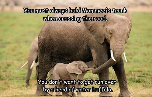 You must always hold Mommee's trunk  when crossing the road.