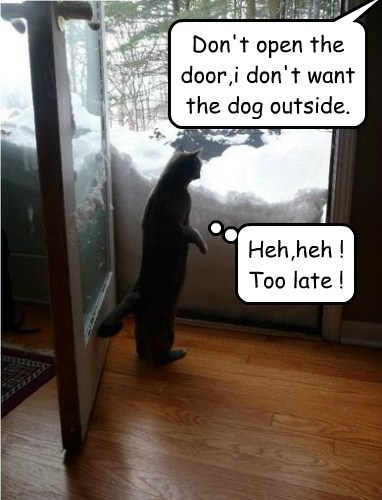 Don't open the door,i don't want the dog outside.