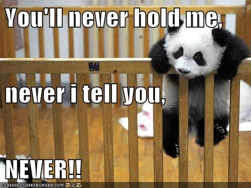 That's One Persistent Panda!