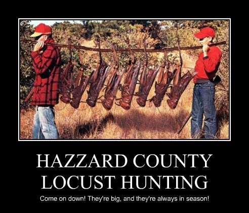 HAZZARD COUNTY LOCUST HUNTING