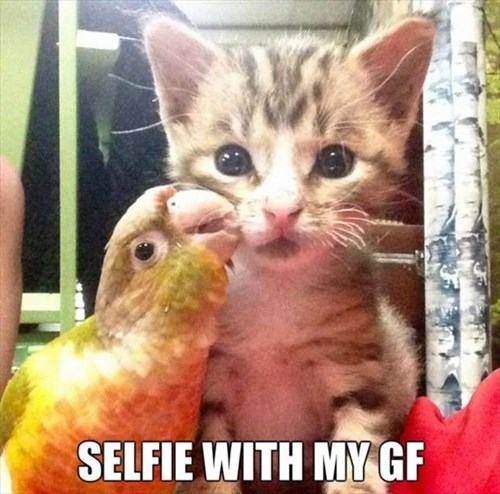 Cats,cute,friends,girlfriend,kitten,peck,parrots