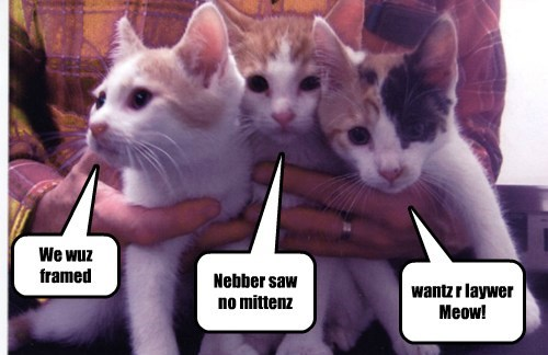 3 liddle kittens accused of stealing mittens