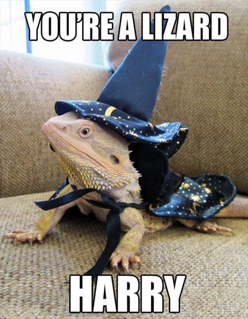 Harry Potter,puns,wizard,lizard