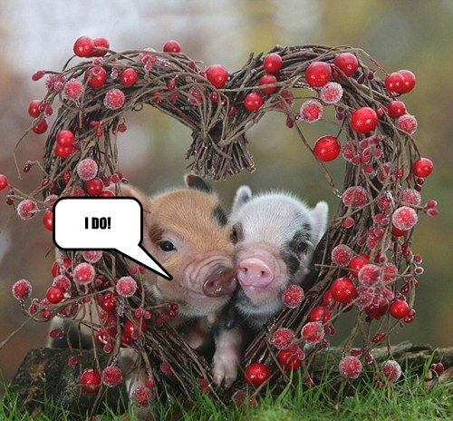 Two Happily Wedded Piggies