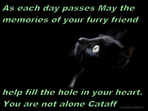 As each day passes May the memories of your furry friend  help fill the hole in your heart.                   You are not alone Cataff