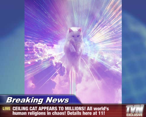 Breaking News - CEILING CAT APPEARS TO MILLIONS! All world's  human religions in chaos! Details here at 11!