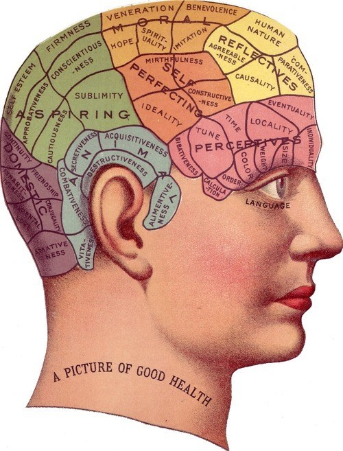 Not Sure That's How Brain Anatomy Works...