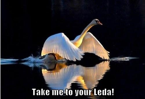 Take me to your Leda!