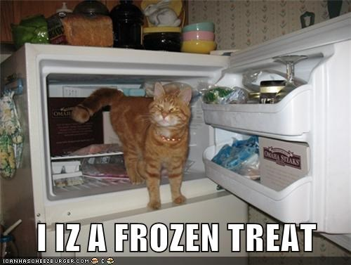 I IZ A FROZEN TREAT