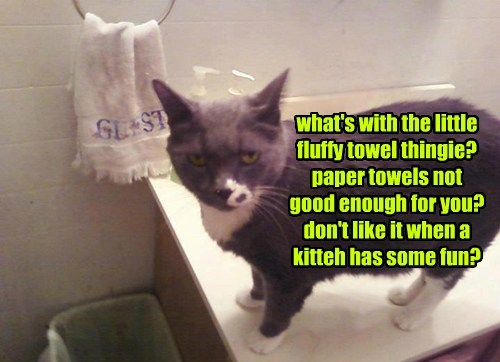what's with the little fluffy towel thingie? paper towels not good enough for you? don't like it when a kitteh has some fun?