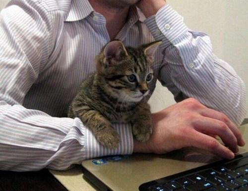 Cats,computer,work,lolspeak