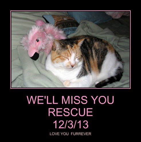 WE'LL MISS YOU RESCUE 12/3/13