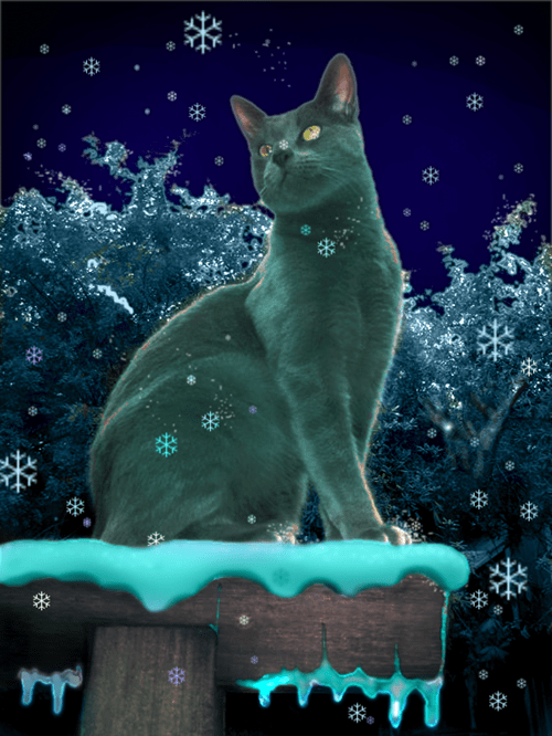Silvertoes...Silvertoes...It's Catmas time in the Foothills...softly pounce, lilt and bounce...Soon it will be LOLmas day!