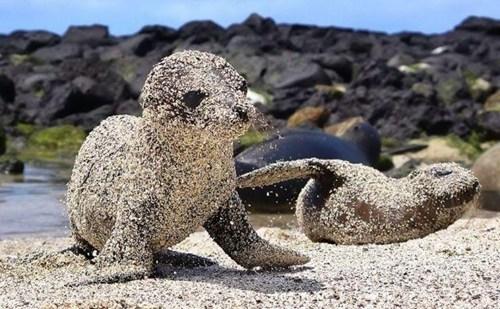 sand,seals,sun,squee,sun block