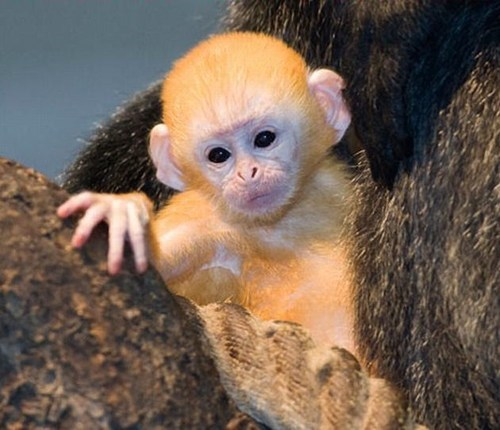 This Little Baby Monkey is so Squee!