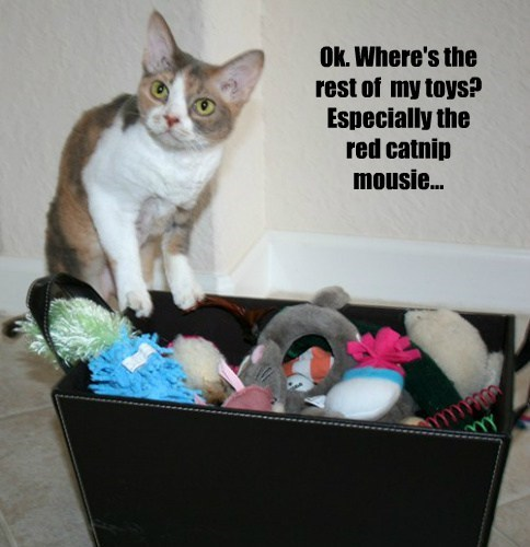 Ok. Where's the rest of  my toys? Especially the red catnip mousie...