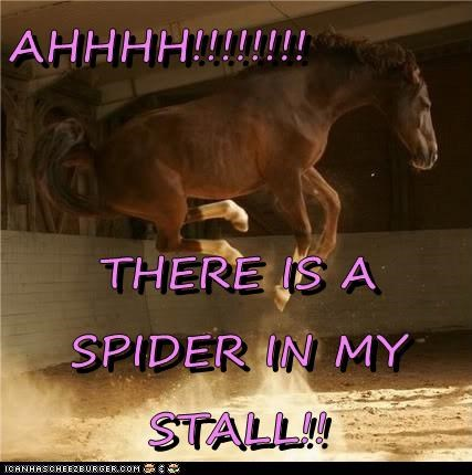 spiders,stall,jump,horses,funny