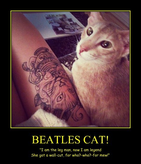 BEATLES CAT!