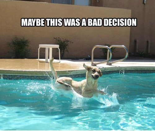 dogs,water,cute,swimming,pool,mistake,funny
