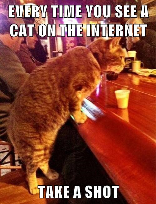EVERY TIME YOU SEE A CAT ON THE INTERNET  TAKE A SHOT