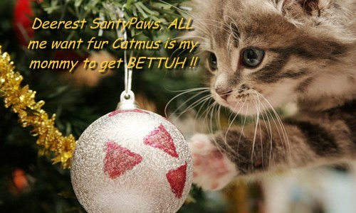 Deerest SantyPaws, ALL me want fur Catmus is my mommy to get BETTUH !!
