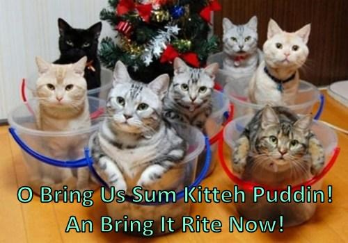 O Bring Us Sum Kitteh Puddin! An Bring It Rite Now!