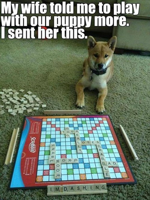 cute,dogs,husband,funny,smart,doge,scabble