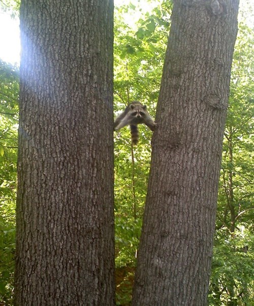 Stuck Between a Tree and a Hard Place