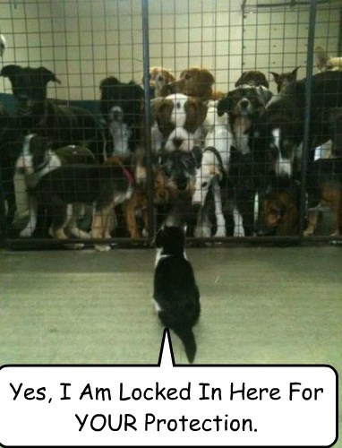 Yes, I Am Locked In Here For YOUR Protection.