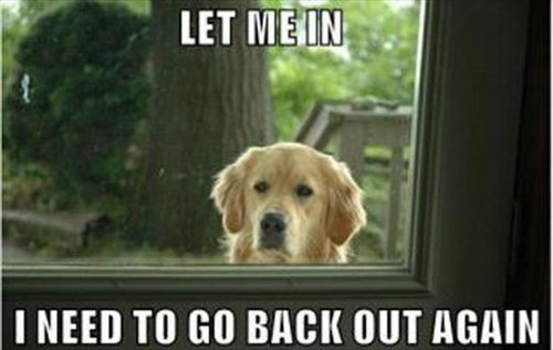Now That's What I Call Dog Logic