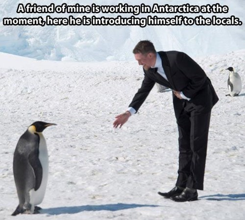 Who Has the Better Penguin Suit?