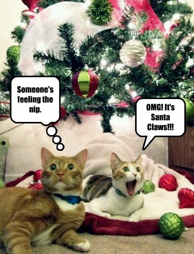 Twas teh Nite Before Catmas and All Froo teh Haus, Nawt a Kreetur was Sturring, Nawt Eben a Maus. Teh Stokkings wur Hung by teh Tree wif Grat Care, in Hops dat Santa Claws Wood Soon be Der..... But Some Nawty Kitties got Intoo der Stokkings Errlee.....
