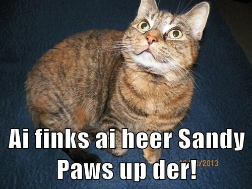Ai finks ai heer Sandy Paws up der!