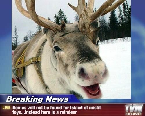 Breaking News,christmas,TV,reindeer