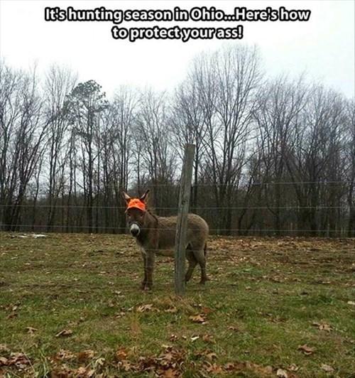 donkeys,hunting,funny,puns