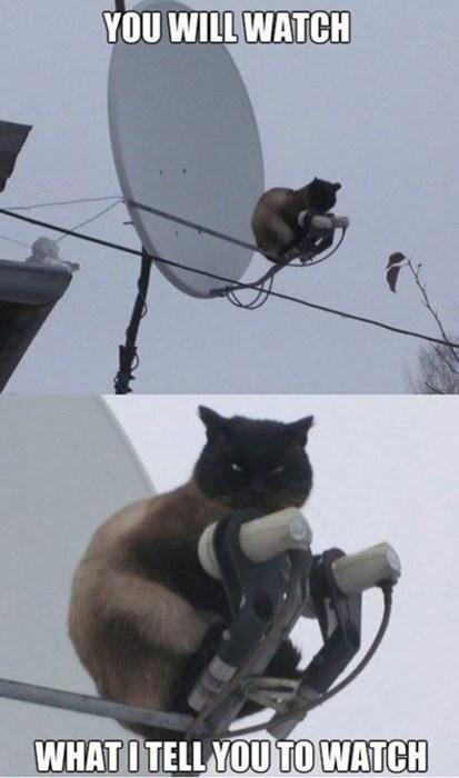 Cats,satellite,funny,televion