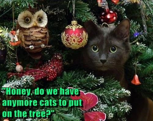 """Honey, do we have                                                          anymore cats to put                                                         on the tree?"""