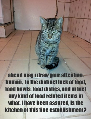 ahem! may i draw your attention, human,  to the distinct lack of food, food bowls, food dishes, and in fact any kind of food related items in what, i have been assured, is the kitchen of this fine establishment?