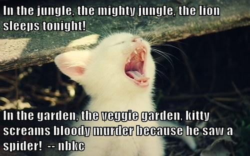 In the jungle, the mighty jungle, the lion sleeps tonight!  In the garden, the veggie garden, kitty screams bloody murder because he saw a spider!  -- nbkc