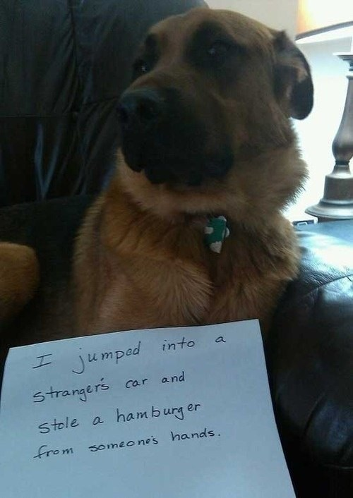 Now This is Our Kind of Dog!