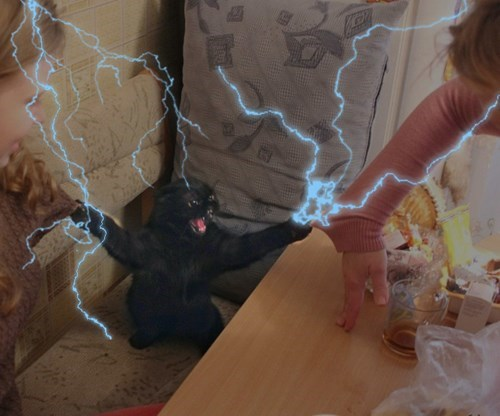 photoshop,photoshop battle,Cats,animals,the angry cat