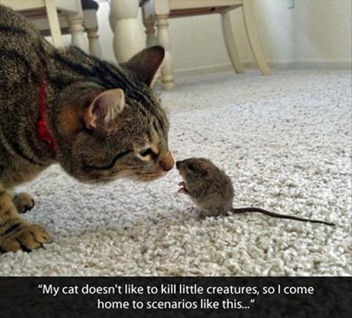 Cats,cute,friends,mice