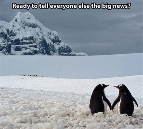 cute,cold,news,penguins,love