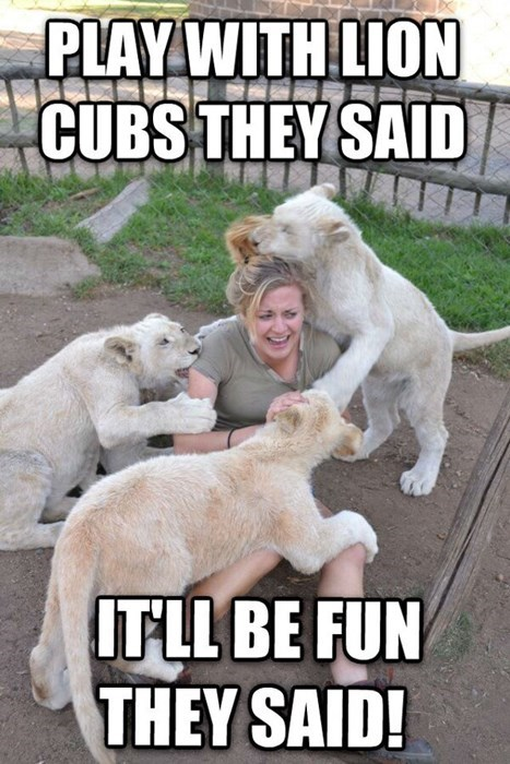cubs,funny,mistake,lions,regret