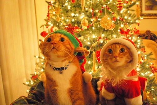 40 Pets Who Are Ready for Christmas