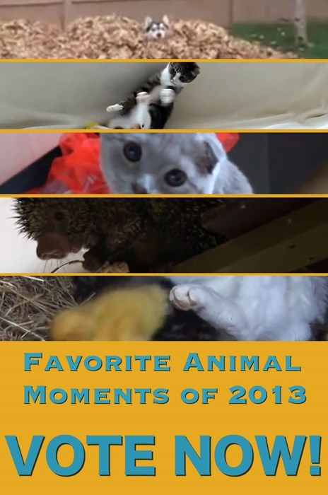 A Year in Review: Favorite Animal Moments of 2013