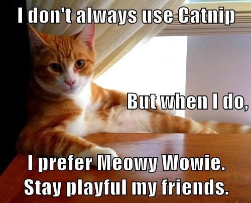 I don't always use Catnip But when I do, I prefer Meowy Wowie.      Stay playful my friends.