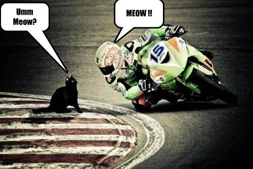 Umm Meow?